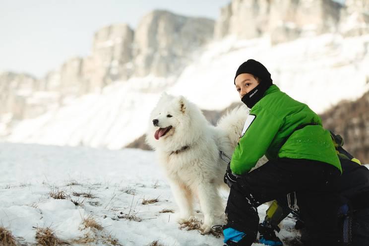109_chien_samoyede.jpg